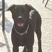 Adopt A Pet :: Keli - Houston, TX