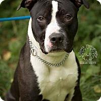 Adopt A Pet :: Jett - RESCUED! - Zanesville, OH