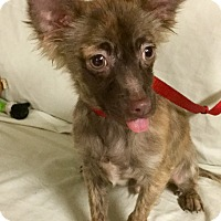 Adopt A Pet :: Cayenne Pepper - Phoenix, AZ