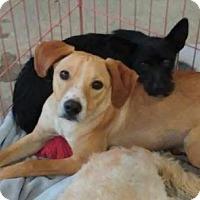 Adopt A Pet :: Gracie - Castaic, CA