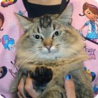 Adopt A Pet :: Jude - Wildomar, CA