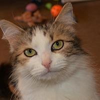 Adopt A Pet :: Paula II - Cincinnati, OH