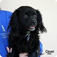 Adopt A Pet :: Clever - Santa Maria, CA