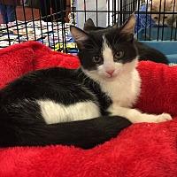 Adopt A Pet :: Princess - Smyrna, GA