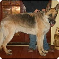 Adopt A Pet :: Hunter - Adoption Pending - Hamilton, MT