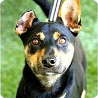 Adopt A Pet :: Reggie - Mission Viejo, CA
