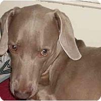 Adopt A Pet :: Obie - Attica, NY