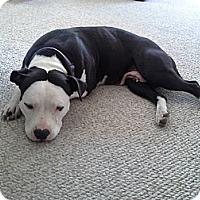 Adopt A Pet :: Lilly - La Habra, CA