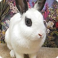 Adopt A Pet :: Summer - Foster, RI