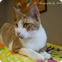 Adopt A Pet :: Lady Marmalade - Byron Center, MI
