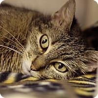 Adopt A Pet :: Kala - Chicago, IL