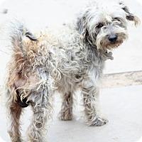 Adopt A Pet :: Camfield - MEET ME - Norwalk, CT