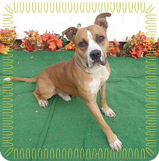 Boxer Mix Dog for adoption in Marietta, Georgia - ROLLINS