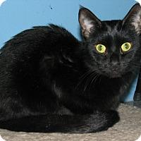 Adopt A Pet :: Carbon - New Kensington, PA