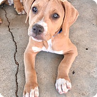 Adopt A Pet :: Murphy - Newport Beach, CA