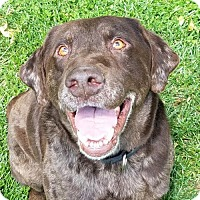 Adopt A Pet :: Devereaux - Mt. Vernon, IN