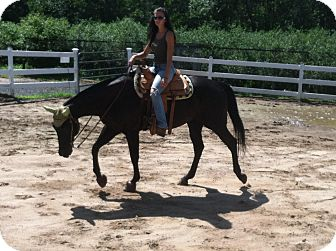 Quarterhorse for adoption in East Granby, Connecticut - Jackie