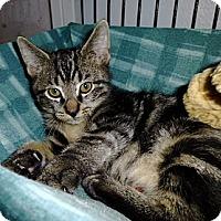 Adopt A Pet :: Rocky Road - Deerfield Beach, FL