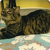 Adopt A Pet :: Bobbi - Chesapeake, VA