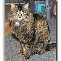Adopt A Pet :: Bevin - Howell, MI