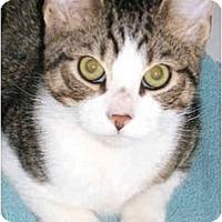 Adopt A Pet :: Baby Buddy - New York, NY