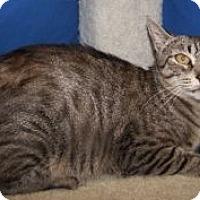 Adopt A Pet :: Gail - Colorado Springs, CO