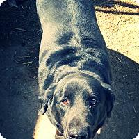 Adopt A Pet :: Wesson - Odessa, TX
