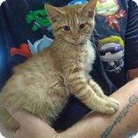 Adopt A Pet :: MARS - Owenboro, KY