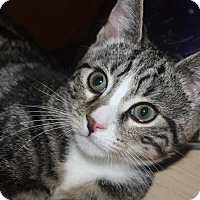 Adopt A Pet :: Jeremy (LE) - Little Falls, NJ
