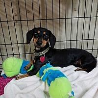 Adopt A Pet :: Herbie - Lubbock, TX