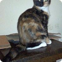 Adopt A Pet :: Saadi - North Highlands, CA