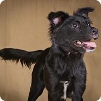 Adopt A Pet :: Marcie - League City, TX