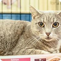 Adopt A Pet :: Wilma - Gainesville, FL