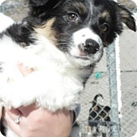 Adopt A Pet :: Woole - Waupaca, WI