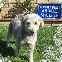 Adopt A Pet :: Cammie - Newport Beach, CA