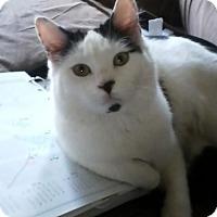 Adopt A Pet :: Moo-Moo - Asheville, NC