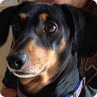Adopt A Pet :: Troy - Decatur, GA