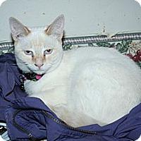 Adopt A Pet :: Desdemona - Santa Rosa, CA