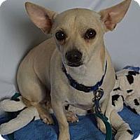 Adopt A Pet :: Dusty - Aurora, CO