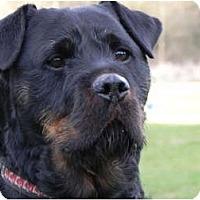 Adopt A Pet :: Mitzi - Surrey, BC