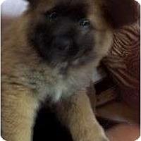 Adopt A Pet :: Vaughn - Plainfield, CT