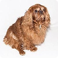 Adopt A Pet :: Fire - Cumberland, MD