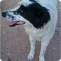 Adopt A Pet :: BUNNY - Gilbert, AZ