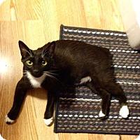 Adopt A Pet :: Shawn - SC - Liberty, NC