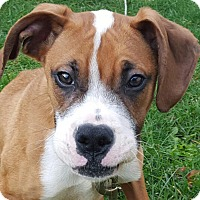 Adopt A Pet :: Rusty - Arden, NC