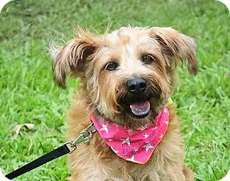 Terrier (Unknown Type, Medium) Mix Dog for adoption in San Francisco, California - Debby