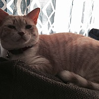 Adopt A Pet :: Mona - Mesa, AZ
