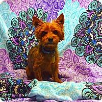 Adopt A Pet :: York - Pittsburgh, PA