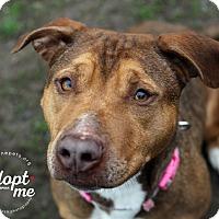 Adopt A Pet :: Shannon - Lyons, NY