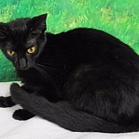 Adopt A Pet :: Shining Star - Lucedale, MS